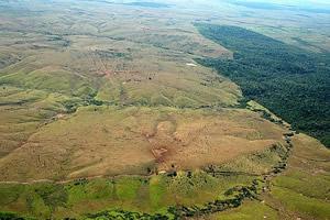 Retrato da floresta amazônica no sul do Pará - nem a mata ciliar é poupada
