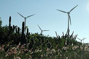 Vegetação nova em Fortaleza? Energia eólica em ação.
