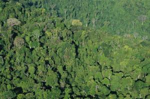 A magnífica FLONA de Carajás, uma ilha verde cercada pela devastação do desmatamento. Foto Margi Moss