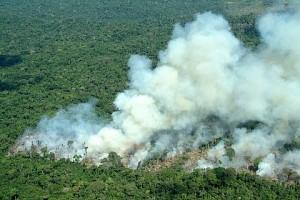 O futuro de toda Amazônia? - Foto: Margi Moss