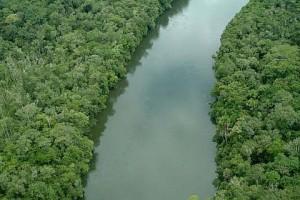 15/11/2003 - O verde do rio Verde, perto de Sorriso, MT - Foto: Margi Moss